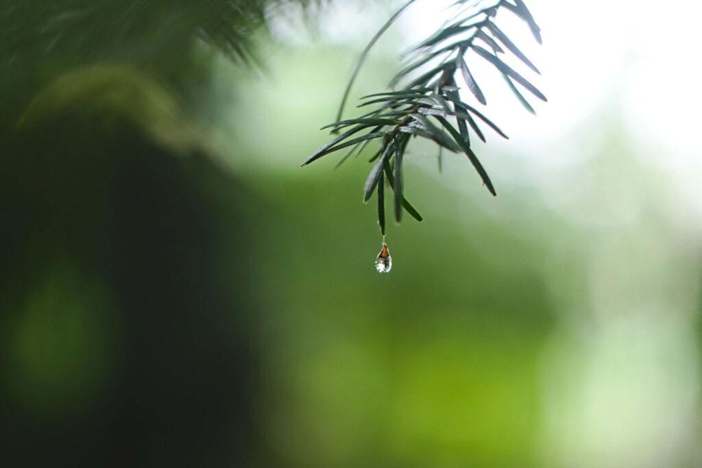 The Magic of Wet Weather Adventures